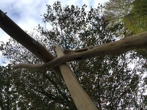 Acacia schommel